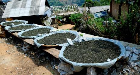 การดื่มชาผู่เออร์ของยูนนานแก้โรคเบาหวานได้จริงหรือ?
