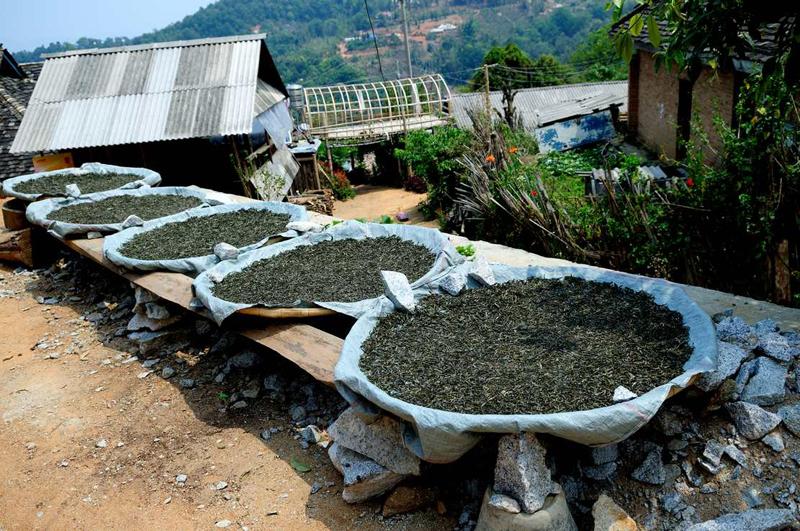 ชาผู่เอ๋อ สุดยอดชาจีน (2)